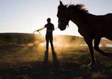 Scopri la comunicazione non verbale attraverso l'uso del Cavallo